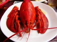 lobster-1317255